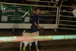 Dalynn Black sets his goat up during the sale.